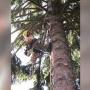 Limpieza+parcelas+jardín+Bellaterra+663777576+tala+pinos+peligrosos+poda y tala