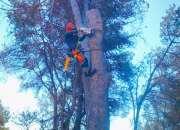 Corte de pinos peligrosos+663.777.576