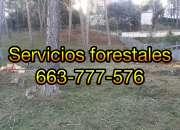 Desbroce y limpieza de terrenos profesional |663 777 576
