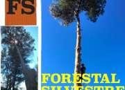 TREPA Y TALA DE ARBOLES|podas y talas|663 777 576